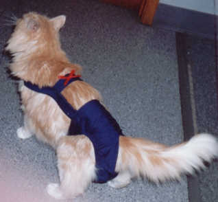 Navy Blue Piddle Pants™ For Cats