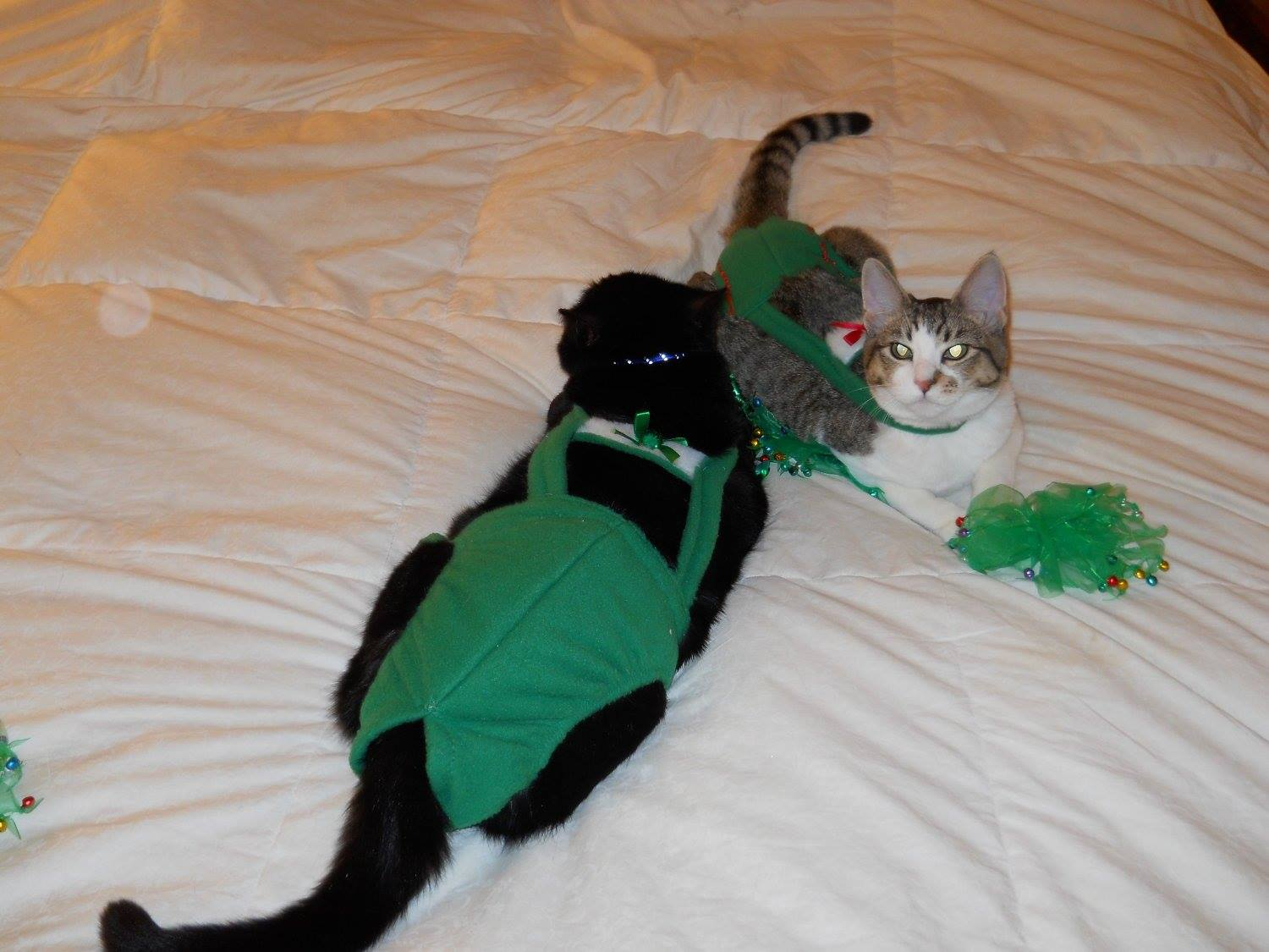 Green Xmas Piddle Pants™ For Cats