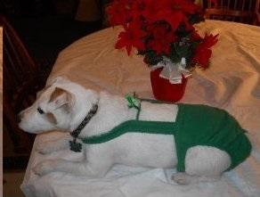 Joybies™ Green Christmas Piddle Pants™
