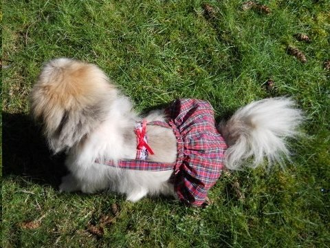 Red Plaid Piddle Skirt™