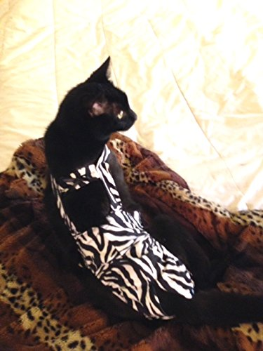 Zebra Piddle Pants™ for Cats