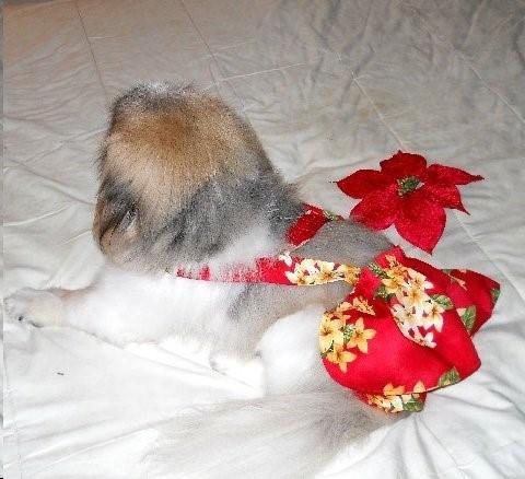 Aloha Red Piddle Skirt™